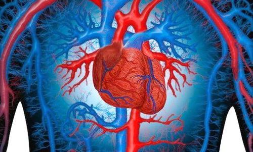 Современные советы в изучении строения сердца, портал «Наше-Сердце.ру»