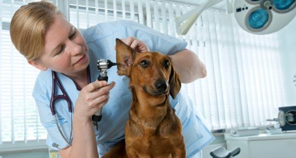 """Современная помощь для домашних питомцев, ветеринарная клиника """"Беланта"""""""