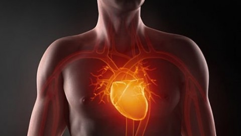 Как правильно должно сокращаться наше сердце