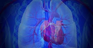 Факторы риска развития гипертонии и профилактика заболевания