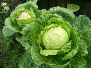 Листовые овощи иногда доводят до сердечной недостаточности, предупреждают врачи