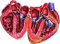 Естественное течение врождённых пороков сердца