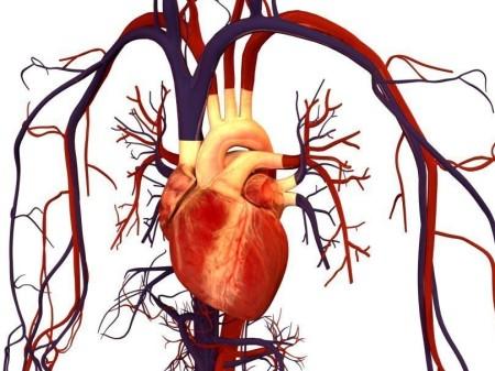 Ревматоидная болезнь сердца