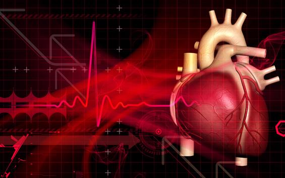 Регенеративная способность сердца млекопитающих зависит от тяжести травмы