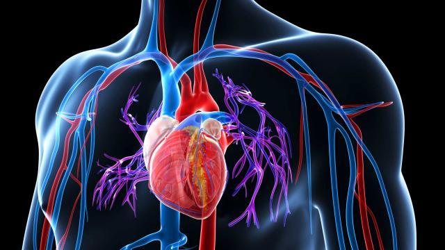 Влияние противовоспалительных препаратов на состояние сердца при ревматоидном артрите