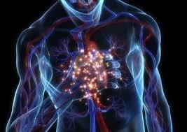Мерцательная аритмия — «сумасшествие сердца»