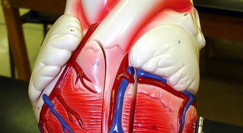 Препараты кальция не приводят к возникновению ишемической болезни сердца