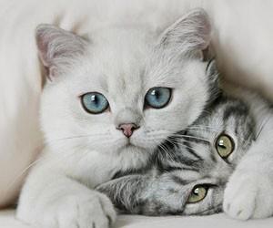 Кошки помогут нормализовать давление