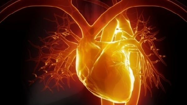 Сердечную мышцу можно будет «заштопать»