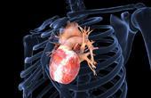 Как клетки рубцовой ткани преобразуются в клетки сердца