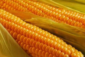 О пользе кукурузы для сердца