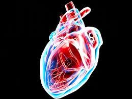 Сердце мыши бьется после регенерации посредством сердечных клеток-предшественников