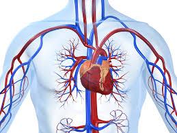 Ишемическая болезнь сердца, ИБС