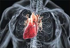 Что такое пороки сердца?