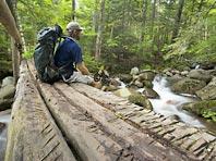 Прогулки в лесу спасут от депрессии и гипертонии