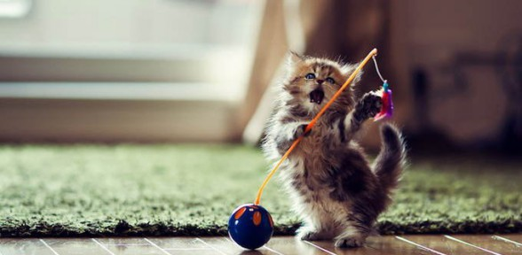 Роды у кошки: о чем нужно знать?