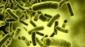 Кишечные бактерии могут защитить от инсульта
