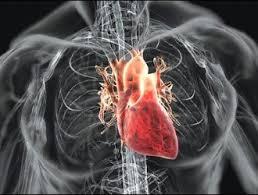 Эндокардит: когда инфекция убивает сердце