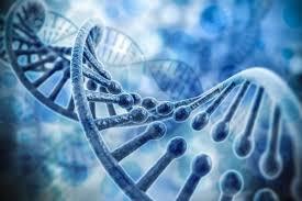 Память о сердечном приступе может храниться в генах