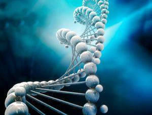Генная терапия сердечно-сосудистых заболеваний