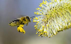 Волшебное натуральное средство для поддержания здоровья и красоты — пчелиная пыльца!