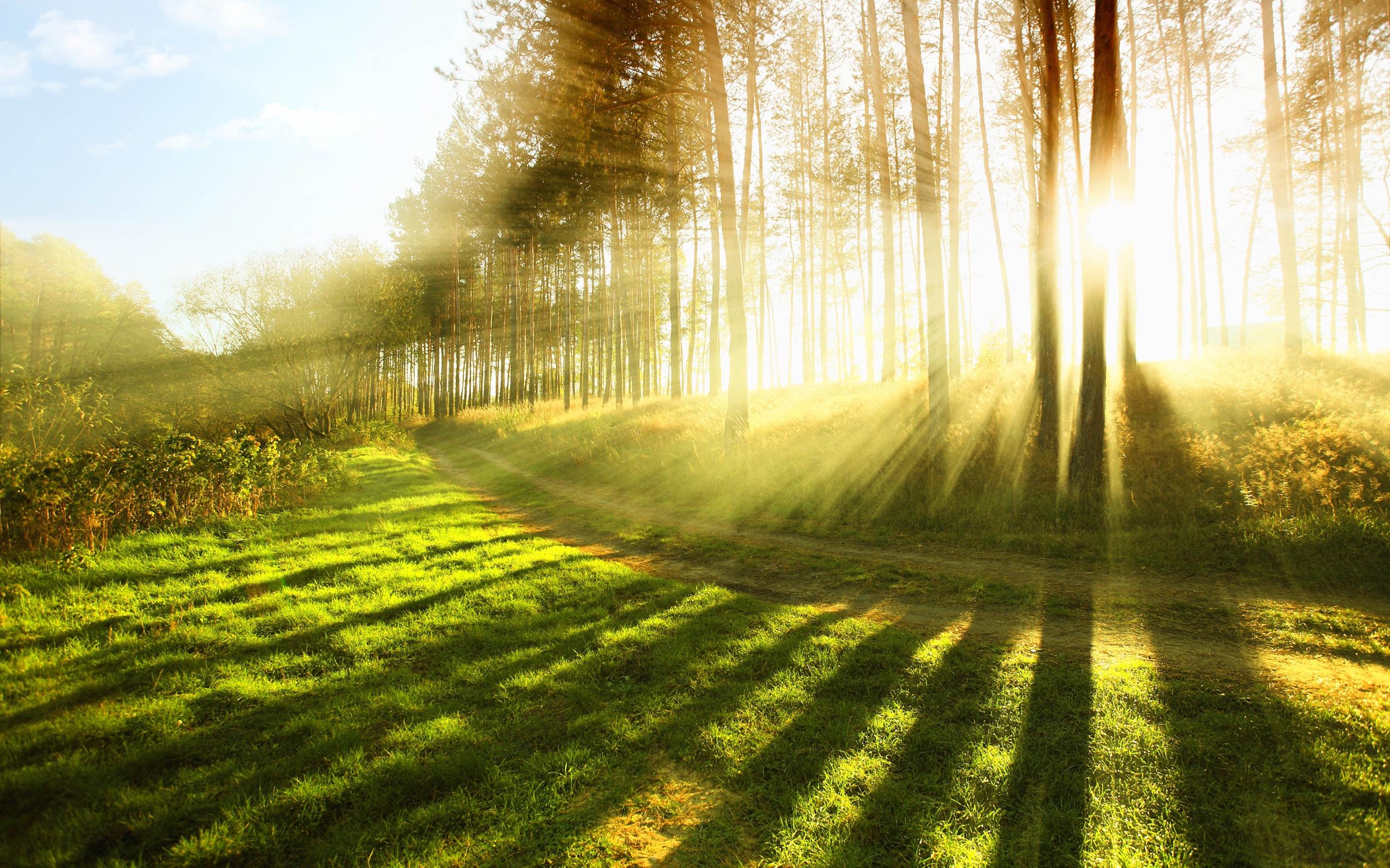 Солнечный свет снижает риск сердечных заболеваний