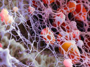 Новые свойства обнаружили у тромбоцитов