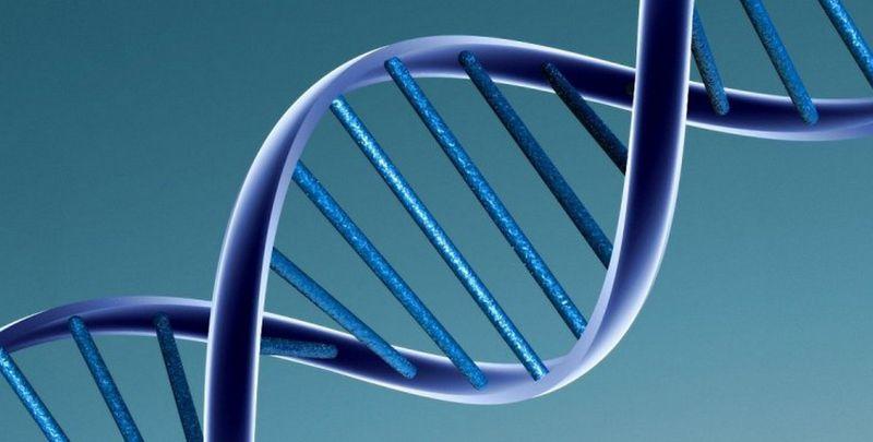 В США допустили создание генетически модифицированных людей