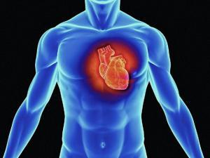 Исследования в кардиологии