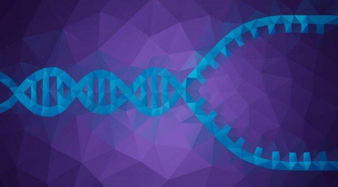 """Терапия рибонуклеиновой кислотой может снижать уровень """"плохого"""" холестерина на 42-53%"""