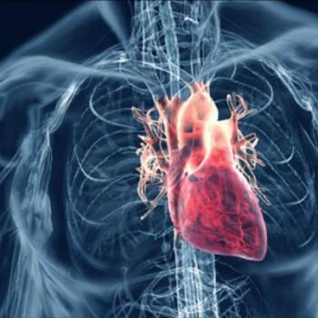 Выяснилось, как запускать процесс регенерации сердца