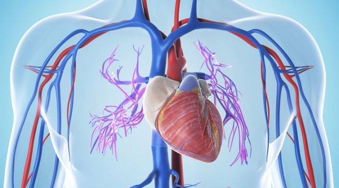 Сердечная недостаточность и микрофлора кишечника связаны между собой