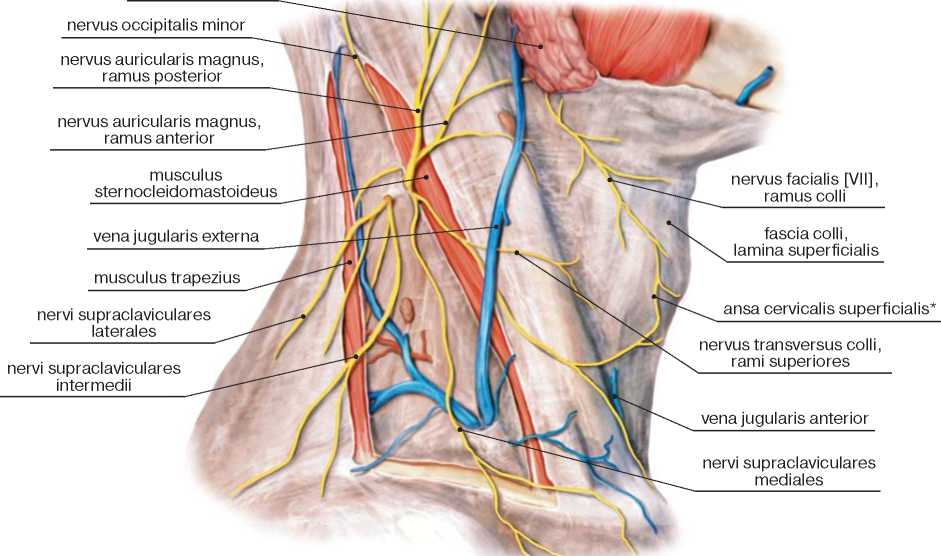 Сплетения позвоночного нерва
