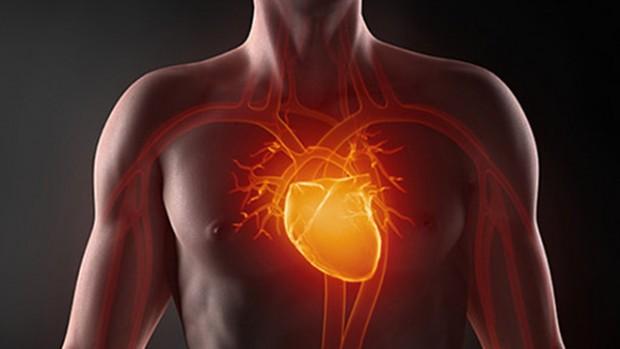 Ученые объяснили, как в сердце образуются кровеносные сосуды