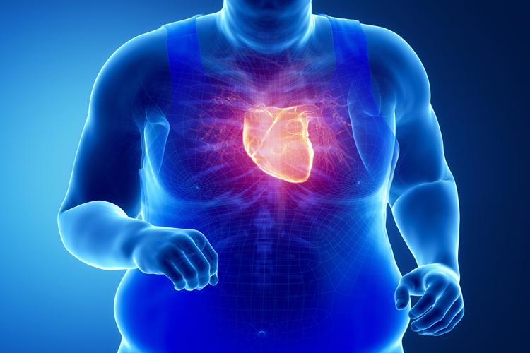 Лежит на сердце тяжкий груз: как связаны ИМТ и масса сердца?