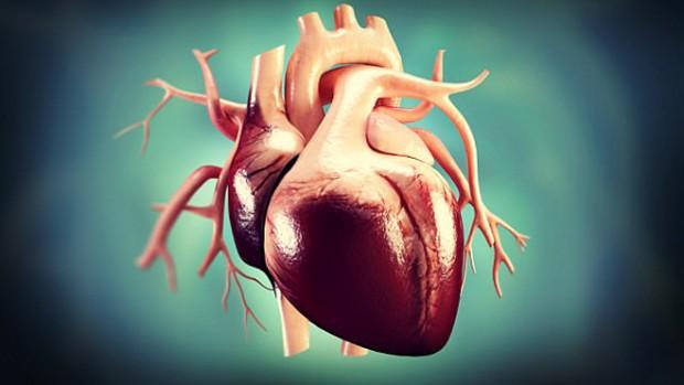 Избыточный вес делает сердце более крупным, повышая риск развития инфаркта и инсульта