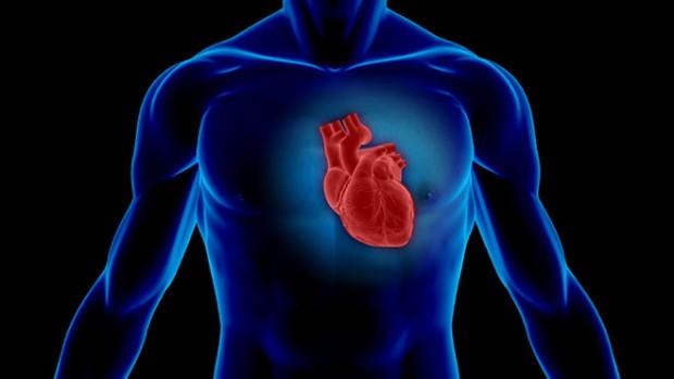 Сердце девушек и парней имеет разную скорость старения