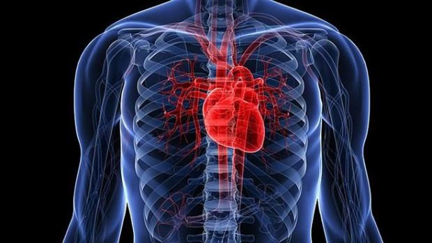 Витамин D и физические упражнения укрепляют сердце