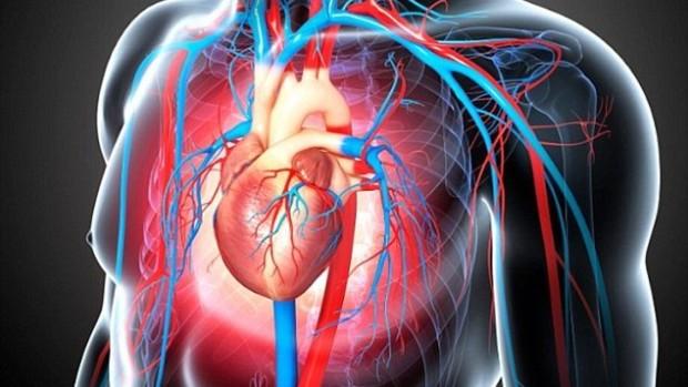«Хороший» холестерин не всегда может защитить от болезней сердца