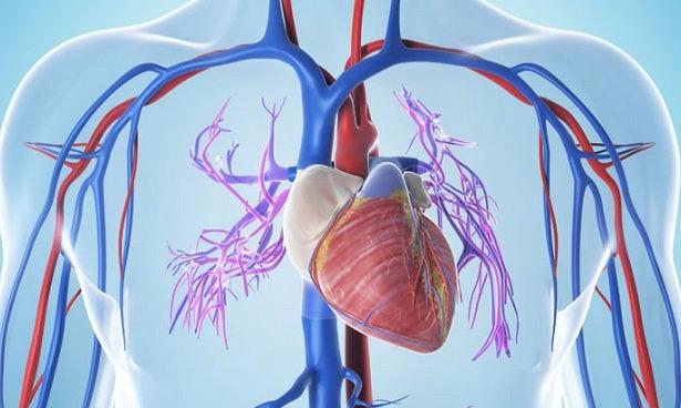 Открыт новый фактор гипертрофии сердечной мышцы