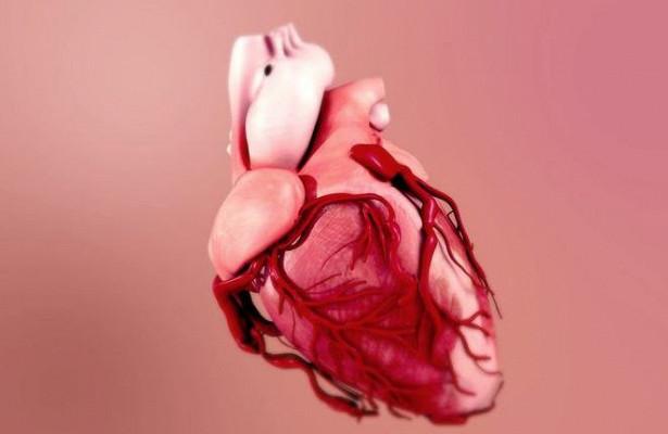 Нанокаркас поможет выращивать сердечную ткань