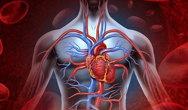 В самое сердце: ученые назвали пять самых вредных продуктов для главной мышцы