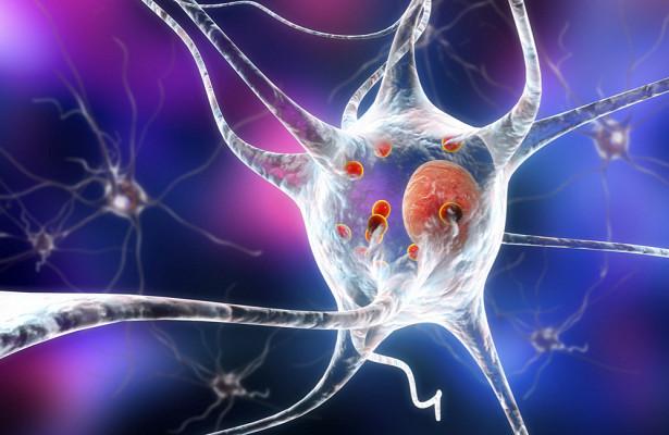 «Белок болезни Паркинсона» оказался нужен для нормального развития мозга