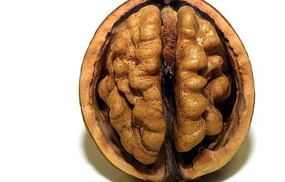 Ученые создали доставляющий лекарства напрямую в мозг имплантат