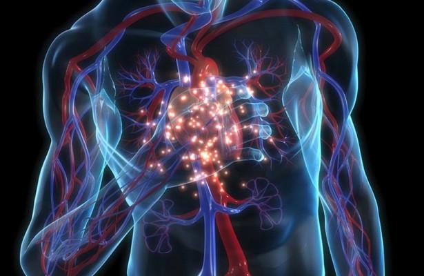 Учёные синтезировали белок для предотвращения инфарктов