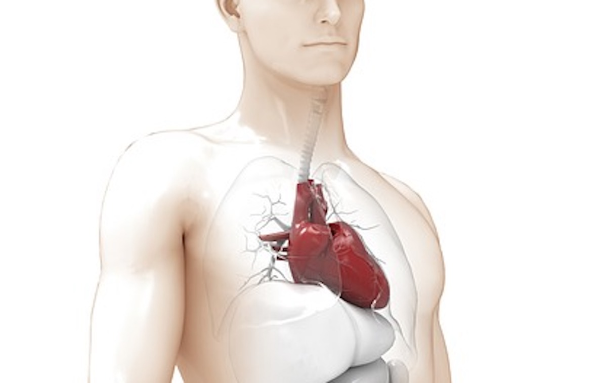 Ученые нашли способ омолодить сердце и сосуды на 20 лет