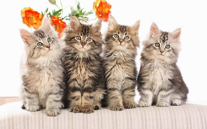 Как выбрать маленького котенка