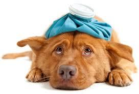 Услуги ветеринарной клиники «ВетУют» в Москве
