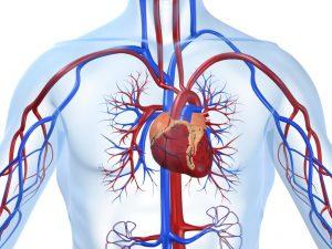 Болезни сердца возникают от нехватки любви и ярких эмоций – психолог