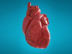 Клетки сердца могут адаптироваться к повышенному давлению